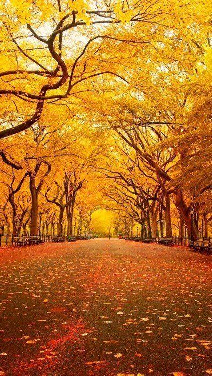 Orange Central Park